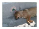 Название: Собака электроника ;) Фотоальбом: Животные Категория: Разное  Фотокамера: Nokia - E51 Диафрагма: f/3.2 Фокусное расстояние: 49/10   Описание: Подзаряжается?  Просмотров: 2468 Комментариев: 0