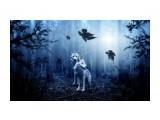 wolf-2864647__480