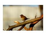 DSC06062_новый размер Фотограф: В.Дейкин  Просмотров: 1496 Комментариев: 1