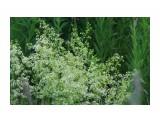 Полевые цветы... Фотограф: vikirin  Просмотров: 2299 Комментариев: 0