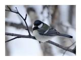 Название: DSC01245_1 Фотоальбом: Птицы Категория: Животные  Время съемки/редактирования: 2017:11:19 10:30:14 Фотокамера: SONY - DSC-HX300 Диафрагма: f/6.3 Выдержка: 1/250 Фокусное расстояние: 21500/100    Просмотров: 29 Комментариев: 0