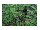 DSC05211 Фотограф: vikirin  Просмотров: 1454 Комментариев: 0