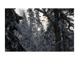 В лесу берендеевском... Фотограф: vikirin  Просмотров: 1810 Комментариев: 0