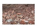 Розовые осыпи... Фотограф: vikirin  Просмотров: 1777 Комментариев: 0