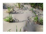 Прибрежная растительность..