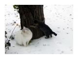 дикие кошки  Просмотров: 32 Комментариев: