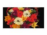 корзина 27 цветов(конфет)  Просмотров: 2108 Комментариев: 0