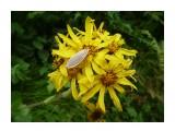 Природа отношений! Насекомые для цветов, или цветы для насекомых! Фотограф: viktorb  Просмотров: 1049 Комментариев: 0