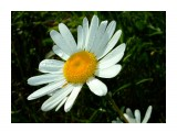 Название: Флора Фотоальбом: Зарница Категория: Цветы Фотограф: Petrovitch  Время съемки/редактирования: 2008:06:30 17:34:17 Фотокамера: FUJIFILM - FinePix F40fd   Диафрагма: f/8.0 Выдержка: 10/10000 Фокусное расстояние: 800/100 Светочуствительность: 200   Просмотров: 590 Комментариев: 0