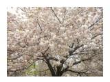 Название: DSCN4332 Фотоальбом: Япония, апрель 2019 Категория: Туризм, путешествия  Время съемки/редактирования: 2019:04:23 00:47:15 Фотокамера: NIKON - COOLPIX S3100 Диафрагма: f/3.2 Выдержка: 10/2500 Фокусное расстояние: 4600/1000    Просмотров: 651 Комментариев: 4