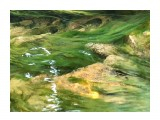Название: FA897981-2A58-411B-A1EF-8B79FA32A6B6 Фотоальбом: Люпиновые поля.... Категория: Природа  Просмотров: 370 Комментариев: 2