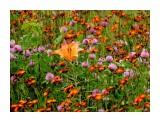 Название: DSC07131_н Фотоальбом: Цветы Категория: Цветы  Время съемки/редактирования: 2016:07:15 16:13:09 Фотокамера: SONY - DSC-HX300 Диафрагма: f/5.6 Выдержка: 1/250 Фокусное расстояние: 11684/100    Просмотров: 44 Комментариев: 1