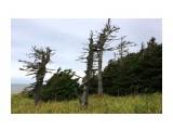 Ветренный лес... Фотограф: vikirin  Просмотров: 1741 Комментариев: 0