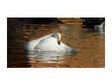 Название: DSC01709 Фотоальбом: Осень в зоопарке Категория: Животные  Просмотров: 80 Комментариев: 0