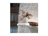 Название: полёт Фотоальбом: мой птичник на балконе Категория: Животные  Время съемки/редактирования: 2011:06:30 16:10:46 Фотокамера: OLYMPUS IMAGING CORP.   - SP570UZ                 Диафрагма: f/7.1 Выдержка: 10/16000 Фокусное расстояние: 1861/100 Светочуствительность: 640   Просмотров: 691 Комментариев: 0