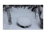 Кому то здесь уютно.. Фотограф: vikirin  Просмотров: 768 Комментариев: 0
