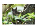 Название: _DSC1175 Фотоальбом: Животинки всяческие Категория: Животные Фотограф: VictorV  Время съемки/редактирования: 2021:10:05 18:29:18 Фотокамера: SONY - ILCA-77M2 Диафрагма: f/5.6 Выдержка: 1/320 Фокусное расстояние: 2800/10    Просмотров: 25 Комментариев: 0
