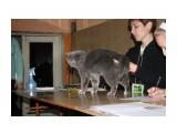Название: IMG_4993 Фотоальбом: выставка кошек 29.11.2009 Категория: Животные  Время съемки/редактирования: 2009:11:29 16:38:44 Фотокамера: Canon - Canon EOS 1000D Диафрагма: f/5.0 Выдержка: 1/60 Фокусное расстояние: 44/1 Светочуствительность: 400   Просмотров: 434 Комментариев: 0