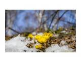 Название: адонис Фотоальбом: Охотское Категория: Природа Фотограф: Tsygankov Yuriy  Время съемки/редактирования: 2021:03:24 17:33:25 Фотокамера: Canon - Canon EOS 6D Диафрагма: f/4.0 Выдержка: 1/1600 Фокусное расстояние: 40/1    Просмотров: 562 Комментариев: 1