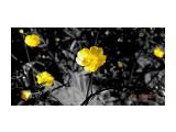 Лютики-цветочки...  Просмотров: 67 Комментариев: 0