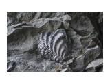 """DSC_0566 Древняя ракушка в камне, возле """"3х Братьев""""  Просмотров: 172 Комментариев:"""