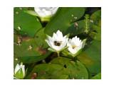 На озере Фотограф: фотохроник  Просмотров: 2179 Комментариев: 0