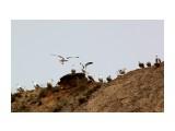 Название: Подвиньтесь!!  Фотоальбом: ЧАЙКИ... Категория: Животные Фотограф: vikirin  Время съемки/редактирования: 2011:07:16 14:50:53 Фотокамера: Canon - Canon EOS Kiss X3 Диафрагма: f/10.0 Выдержка: 1/800 Фокусное расстояние: 250/1 Светочуствительность: 200   Просмотров: 1954 Комментариев: 0
