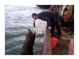 моряки прикалываются при сдаче рыбы сивучи вообще ничего не боятся  Просмотров: 2690 Комментариев: 3