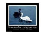 Название: 895545_lish-polyubiv-s-pervogo-vzglyada Фотоальбом: прикольные демотиваторы Категория: Демотиваторы  Просмотров: 1292 Комментариев: 0