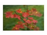 Название: DSC07254 Фотоальбом: Осень Категория: Природа Фотограф: VictorV  Время съемки/редактирования: 2020:10:28 22:47:19 Фотокамера: SONY - SLT-A99 Диафрагма: f/2.5 Выдержка: 1/4000 Фокусное расстояние: 500/10    Просмотров: 103 Комментариев: 0