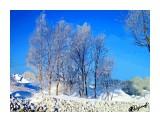 Деревья Фотограф: alexei1903  Просмотров: 230 Комментариев: 0