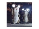 Название: Да будет свет! :))) Фотоальбом: Хахашечки Категория: Юмор  Просмотров: 135 Комментариев: 0
