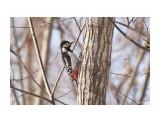Название: БПД, самка ) Фотоальбом: Птички Категория: Животные Фотограф: VictorV  Время съемки/редактирования: 2020:02:17 21:37:40 Фотокамера: SONY - DSLR-A900 Диафрагма: f/6.3 Выдержка: 1/640 Фокусное расстояние: 6000/10    Просмотров: 33 Комментариев: 0