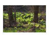Первая зелень... Фотограф: vikirin  Просмотров: 1793 Комментариев: 0