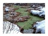 Название: IMG_20190309_113702 Фотоальбом: Даги зимние Категория: Природа Фотограф: vikirin  Время съемки/редактирования: 2019:03:14 00:07:07 Фотокамера: Xiaomi - Redmi Note 5A Диафрагма: f/2.2 Выдержка: 1/1500 Фокусное расстояние: 379/100    Просмотров: 792 Комментариев: 0