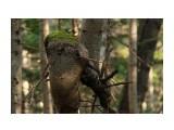 Название: дерево Фотоальбом: природа Категория: Природа  Время съемки/редактирования: 2014:10:19 10:55:26 Фотокамера: Canon - Canon EOS 600D Диафрагма: f/5.6 Выдержка: 1/40 Фокусное расстояние: 100/1    Просмотров: 342 Комментариев: 0