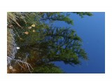 Название: DSC04240 Фотоальбом: 2015 09 Озеро в Славах Категория: Природа Фотограф: vikirin  Время съемки/редактирования: 2015:09:11 12:28:00 Фотокамера: SONY - NEX-5T Диафрагма: f/5.6 Выдержка: 1/80 Фокусное расстояние: 500/10    Просмотров: 700 Комментариев: 0