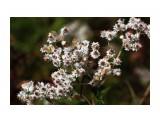 Цветы в тундре.. Фотограф: vikirin  Просмотров: 1605 Комментариев: 0