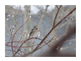 Сахалинская весна.  Просмотров: 484 Комментариев: 0