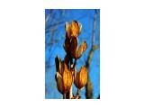 DSC03074_новый размер Фотограф: В.Дейкин  Просмотров: 2159 Комментариев: 0