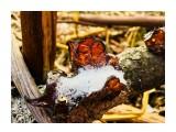 Название: «живой янтарь» Фотоальбом: Rogatka & .... other... Категория: Природа  Время съемки/редактирования: 2017:10:31 14:13:48 Фотокамера: Apple - iPhone 6s Диафрагма: f/2.2 Выдержка: 1/100 Фокусное расстояние: 83/20    Просмотров: 322 Комментариев: 0