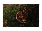 Название: грибы Фотоальбом: природа Категория: Природа  Время съемки/редактирования: 2014:10:19 10:49:46 Фотокамера: Canon - Canon EOS 600D Диафрагма: f/5.6 Выдержка: 1/40 Фокусное расстояние: 120/1    Просмотров: 296 Комментариев: 0