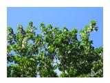 Тополиный пух.. Фотограф: alexei1903  Просмотров: 1110 Комментариев: 0