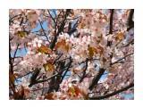 Цвет сакуры  Просмотров: 72 Комментариев: 0