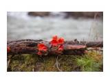 Название: Саркоцифа алая Фотоальбом: Разное Категория: Природа Фотограф: Tsygankov Yuriy  Время съемки/редактирования: 2021:04:27 19:29:53 Фотокамера: Canon - Canon EOS 6D Диафрагма: f/2.8 Выдержка: 1/500 Фокусное расстояние: 50/1    Просмотров: 458 Комментариев: 2