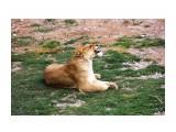 Название: IMG_7805 Фотоальбом: сафари-парк львов(крым) Категория: Животные  Просмотров: 1190 Комментариев: 0