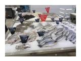 Название: Рыба Фотоальбом: Морепродукты в Санкт-Петербурге 2016г Категория: Разное  Просмотров: 1152 Комментариев: 0