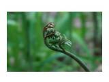 DSC05228 Фотограф: vikirin  Просмотров: 1784 Комментариев: 0