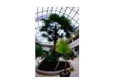 Зимний сад Фотограф: В.Дейкин  Просмотров: 1387 Комментариев: 0