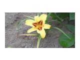 Название: P1000172 Фотоальбом: Цветы. Категория: Цветы  Просмотров: 289 Комментариев: 0